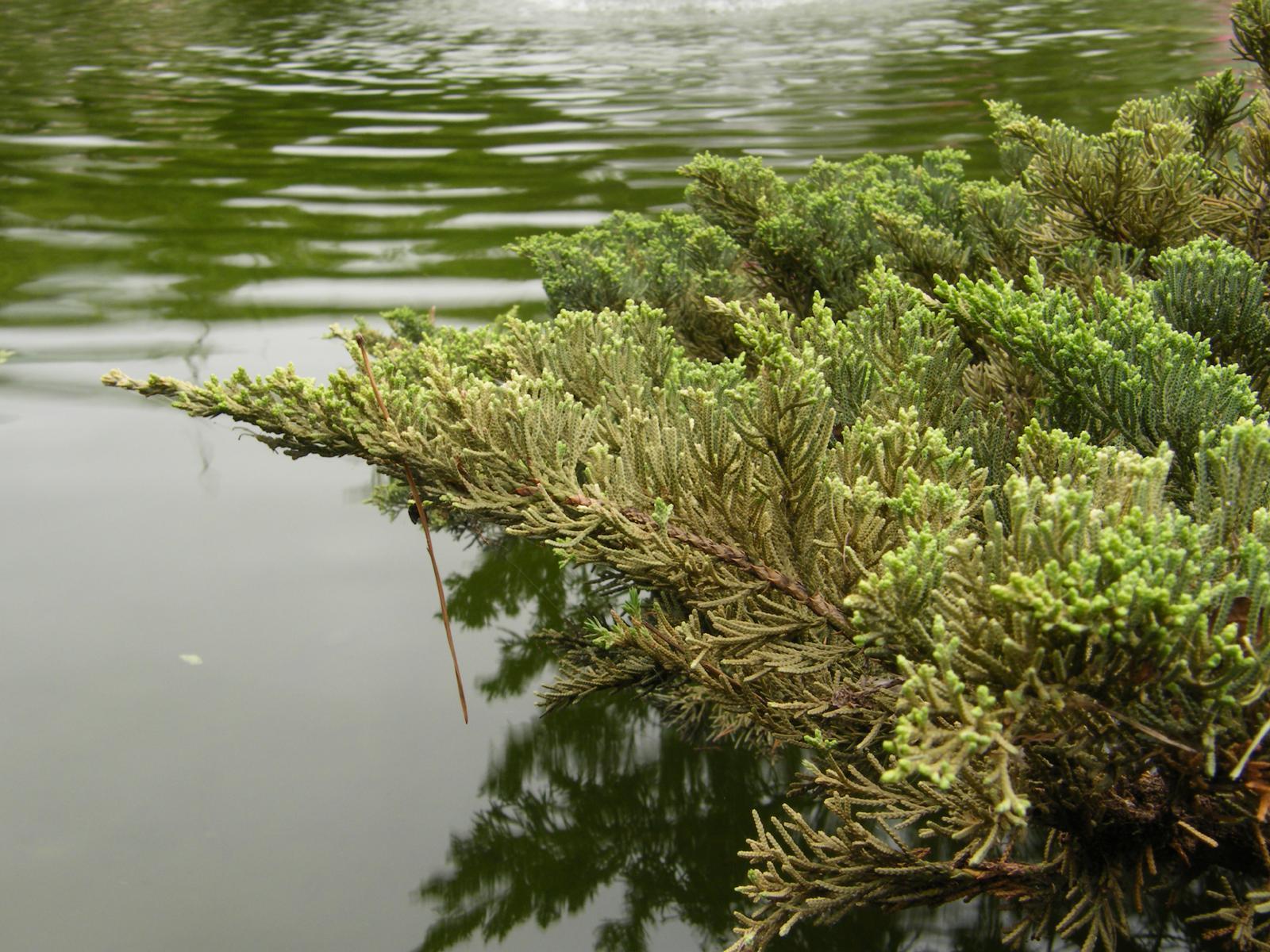 湖中景「逸仙公園」